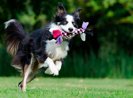 How to choose puppy toys? The right toy for your dog