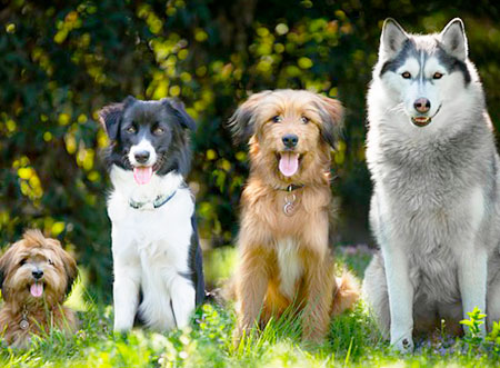 How to Find the Perfect Dog Breed For You